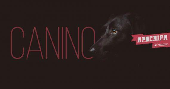 Canino convocatoria