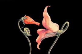 Gerald Scarfe, The Wall, La libido floral