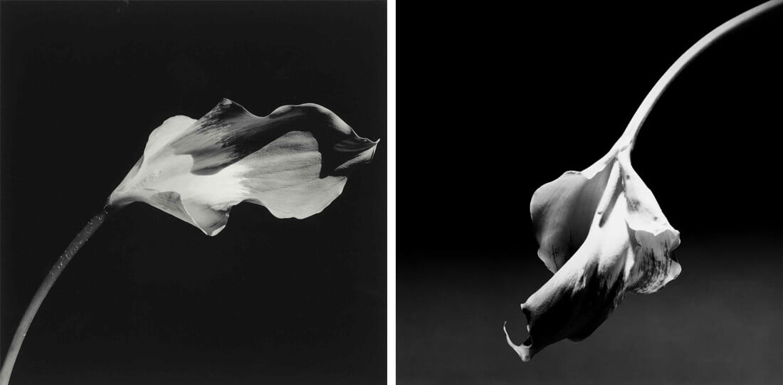 Robert Mapplethorpe, La libido floral