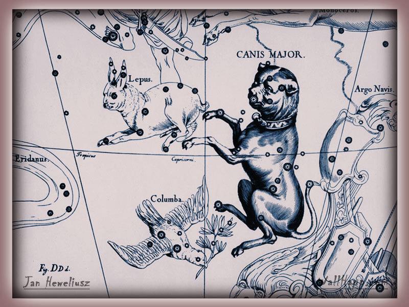 Canis lipus familiaris, Hevelius, canis maior