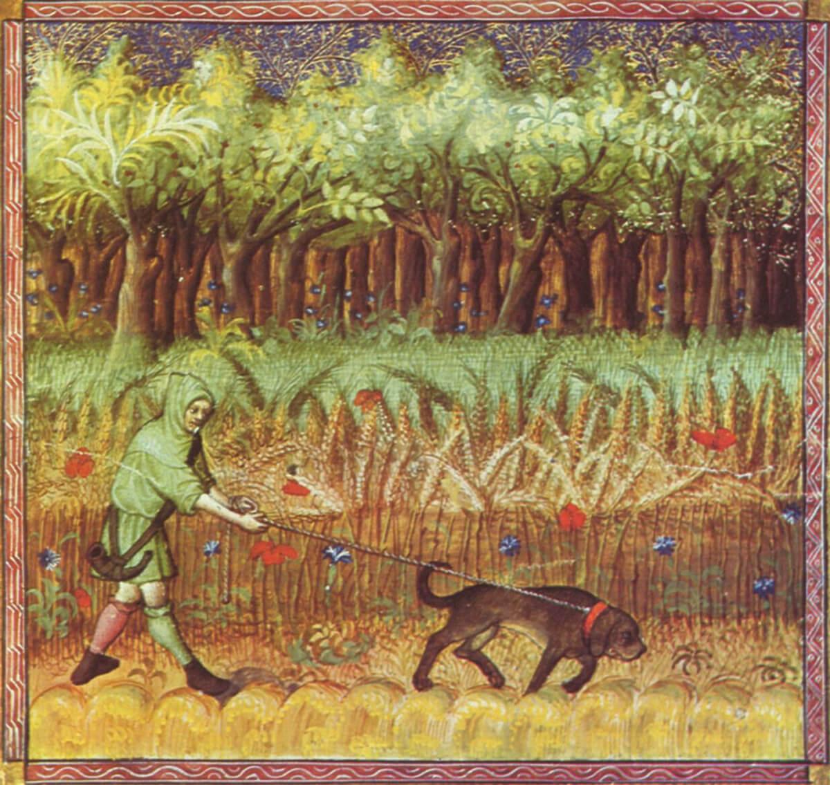 Canis lipus familiaris, libro de la caza