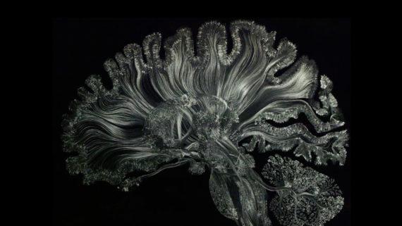 La plástica de la consciencia