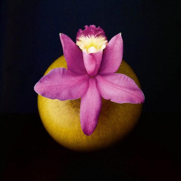 Robert Mapplethorpe, fotografías de flores